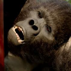 'Hello Charlie' trailer: Aadar Jain shares the screen with a gorilla