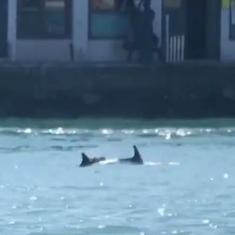 Watch: Dolphins spotted swimming close to St Mark's Square in Venice, Italy