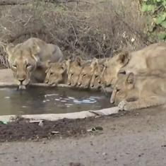 Watch: Forest authorities construct 'water points' for animals in Gir National Park
