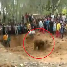 Watch: Baby elephant rescued from 15-feet-deep well in Mayurbhanj, Odisha