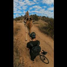 Watch: Photographer has close encounter with a giraffe during cycle ride