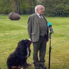 Watch: Irish President's dog refuses to leave him alone – even during a TV interview