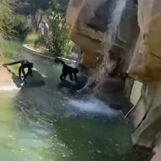 Watch: Woman enters enclosure for spider monkeys, feeds them Cheetos in Texas zoo