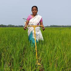 In Assam, new rice varieties are a lifeline for farmers struggling to adapt to climate change