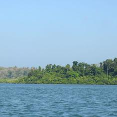For Andaman forests to recover, the intervals between repeat logging must be longer