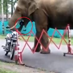 Caught on camera: Wild elephant gobbles up helmet from parked motorbike at military station