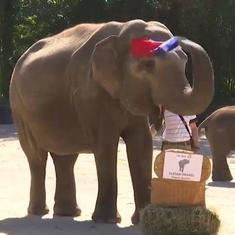 Watch: 'Psychic' elephant predicts Germany will lose its opening match against France in Euro 2020