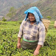 Growers of world-famous Darjeeling tea are going organic