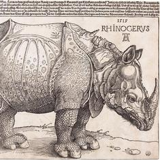 Rhinos to Lisbon, turkeys to Agra: Recalling the history of animal gifts in pre-colonial times