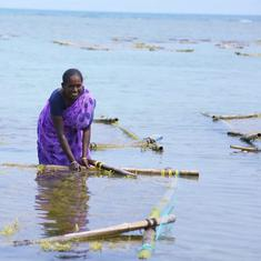 Eco India: Seaweed farms in Tamil Nadu are helping Indians fight climate change