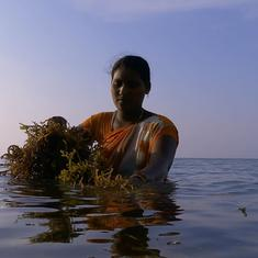 Eco India, Episode 115: Seaweed farms in Tamil Nadu act as carbon sinks, say scientists