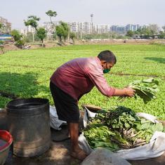 In photos: Mumbai's lesser-known urban farmers