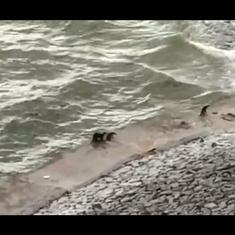 Watch: Smooth-coated otter, listed as endangered, spotted on Hyderabad's Nagarjuna Sagar dam
