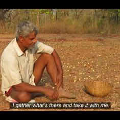 Watch: Why Adivasi farmers near Bandhavgarh Tiger Reserve gather flowers from the special mahua tree