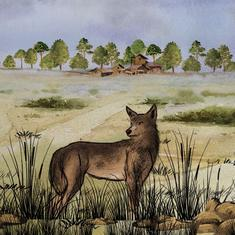 Why the return of wolves to an Indian grassland is a bittersweet story