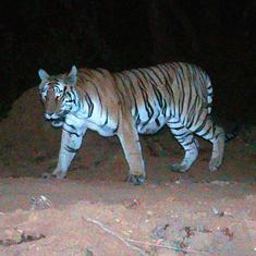 Flashback: The heartbreaking story of IFS officer Saroj Raj Choudhury and his beloved tigress Khairi