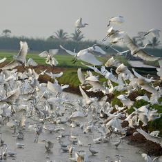 India's 10-year conservation plan finally highlights the need to protect threatened birds