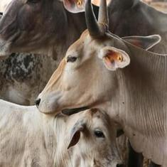 Budget 2019: Centre to set up Rashtriya Kamdhenu Aayog for welfare of cows